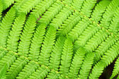 Green Fern in tropical forests. — Stock Photo