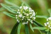 Białe kwiaty w trawie — Zdjęcie stockowe