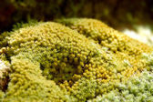 Bright green moss macro shot on the rock in the waterfall. — Stock fotografie