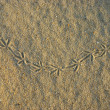 Stock Photo: Pigeon footprints on the sand.