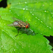 House fly on a green leaf in the garden. — Stock Photo