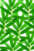 Green bamboo leaves on a white background — Stock Photo