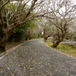 Stock Photo: Curved road in the mountains under the old tree.
