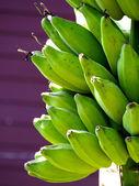 Cacho de bananas na árvore — Fotografia Stock