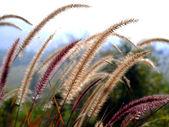 Flower grass — Stock Photo