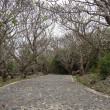 Curved road in the mountains under the old tree. — Stock Photo #37020071