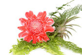Fleur rouge d'etlingera elatior — Photo