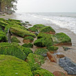 Green algae on the rocks seaside. — Stock Photo