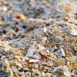 Stock Photo: Shells on beach