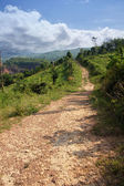 Winding Road in Thailand — Stockfoto