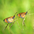 Stock Photo: Two butterflies on grass.