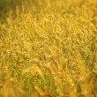 Flower grass impact sunlight. — Stock Photo