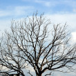 Stock Photo: Silhouettes dead trees. Sky background.
