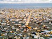 снаряды на пляже — Стоковое фото