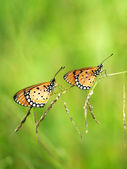 Two butterflies on grass. — Foto Stock