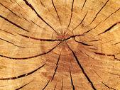Textura de madeira com padrões naturais — Foto Stock