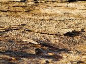 Textura de madeira com padrões naturais — Stok fotoğraf