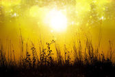 Silhouettes flower grass impact sunlight. — Stock Photo