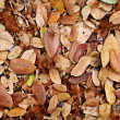 Stock Photo: Leaves fall on floor
