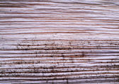 Patterned surface of the bark. — Stock Photo
