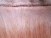 Patterned surface of the bark. — Foto Stock
