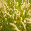Flower grass impact sunlight. — Stock Photo #37228403
