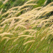 Stock Photo: Flower grass impact sunlight.