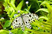 Black white butterflies in the wild. — Foto Stock