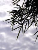 Bamboo leaves background with clouds. — Stock Photo