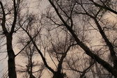 Silhouettes dead trees. Sky background. — Stock Photo