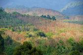 Árvores de folha caduca, durante o verão. — Fotografia Stock