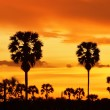 Palm silhouettes after sunset. — Stock Photo