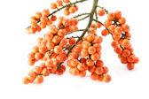 Orange seeds of the palm. — Stock Photo