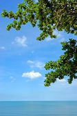 Blue sky background with Leaves. — Stock Photo
