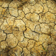 Stock Photo: Soil losses Because of global warming.