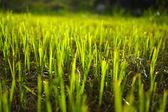 Grass regenerate in the garden. — Stock Photo