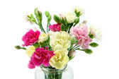 Smaller carnations on a white background for mother's day. — 图库照片