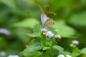 Butterfly on flower — Foto Stock