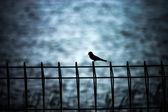 силуэты птиц только на железный забор. — Стоковое фото