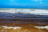 Black sea wastewater. destruction of nature — Stock Photo