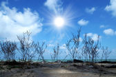 Dry tree seaside Sky background — Foto de Stock