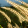 Flower grass impact sunlight. — Stock Photo #38701667