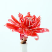 Tropical flower of Pink torch ginger. — Stock Photo