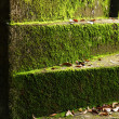 Green moss on the old stairs. — Stock Photo