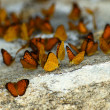 Butterfly Group on stone — Stock Photo
