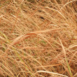 Dry grass — Stock Photo #39485031