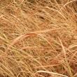 Dry grass — Stock Photo #39485031