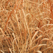 Dry grass — Stock Photo #39485033