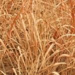 Dry grass — Stock Photo #39485033