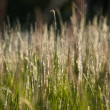Flower grass impact sunlight. — Stock Photo #39485111